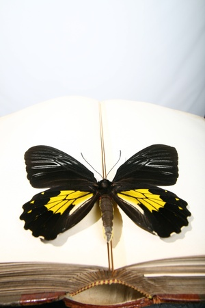 slower: butterfly sitting on a book