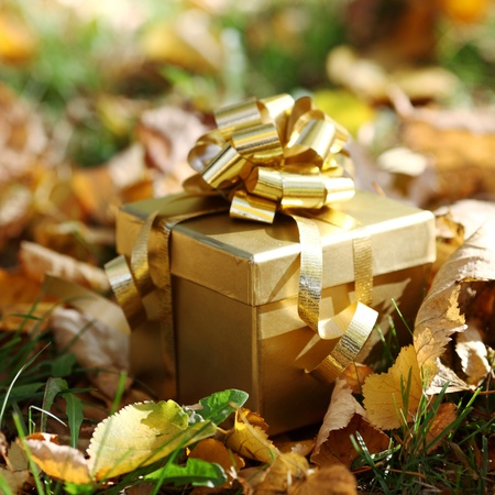 golden gift in autumn forest Stock Photo - 10469830