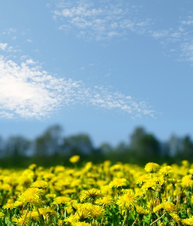 afield: dandelion field green and yellow colors lanscape