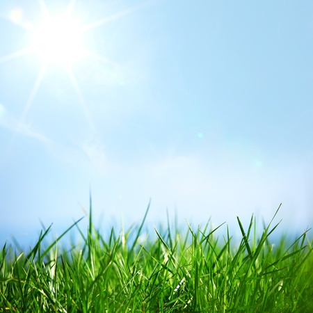 blue sky: green grass under blue sky Stock Photo