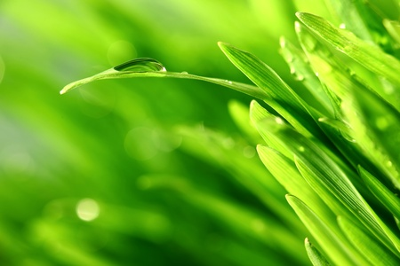water drops on grass blade nature background Stock Photo - 10534877