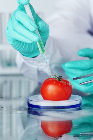 food science:  tomato DNA change microbiology experiment  Stock Photo