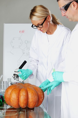 genetic information: Scientist conducting genetic experiment with pumpkin