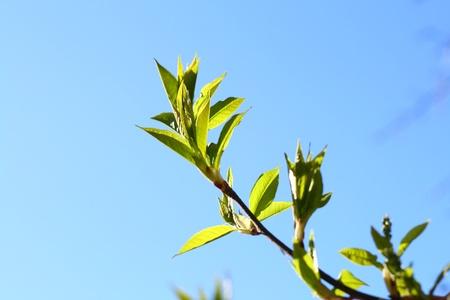 green leaf foliage nature beautiful background Stock Photo - 10651228