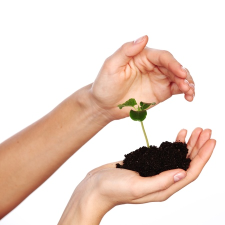 plant in the women hands on a white background photo