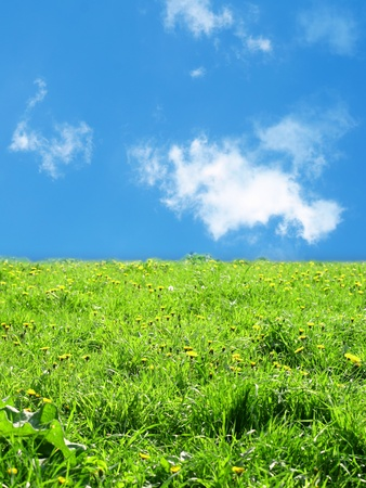 green grass landscape nature background photo