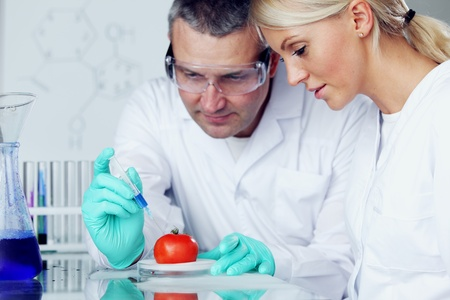manand woman try to change tomato DNA Stock Photo - 10813726