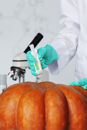 Scientist conducting genetic experiment with pumpkin Stock Photo - 10813711