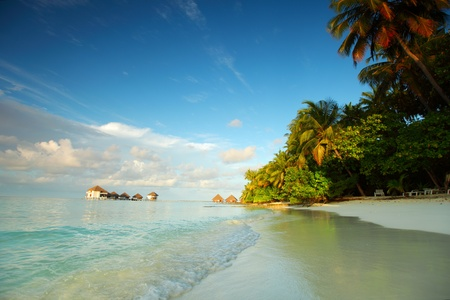 maldives landscape ocean palm sky photo