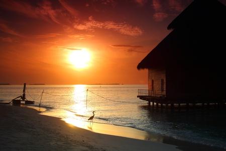 romantico: Resort Maldivas casas en la salida del sol