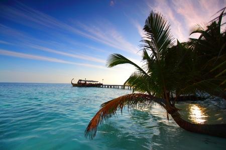 île tropicale de palmiers de la mer et le ciel