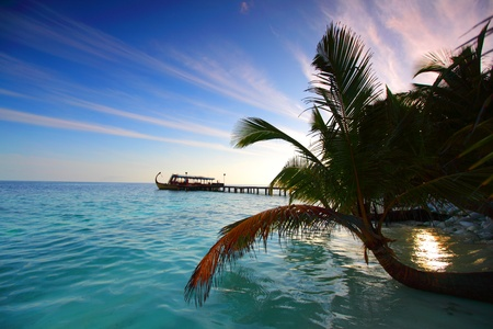 tropical island palm sea and sky Stock Photo - 10895950