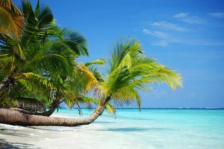 熱帯の島のヤシの海と空