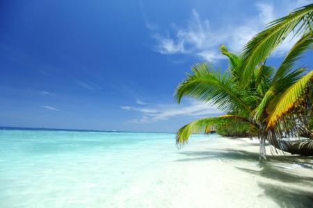 f�tes: �le tropicale de palmiers de la mer et le ciel