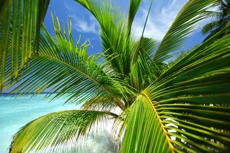 tropical island palm sea and sky Stock Photo - 10895926