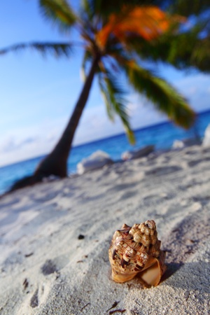 shell on sand under palm Stock Photo - 10895995