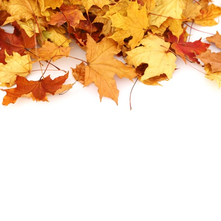 dry leaves: autumn leaves isolated on white Stock Photo