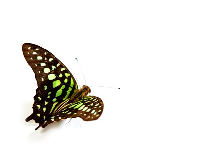 Graphium isolated on white background Stock Photo - 10939886