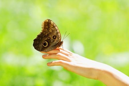 donna farfalla: farfalla su una mano femminile vicino