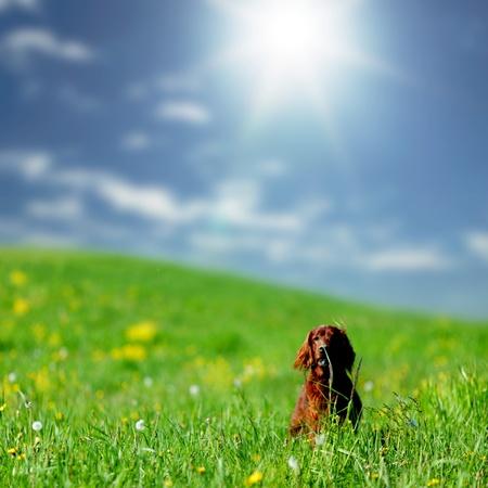 mujer perro: perro en campo de hierba verde