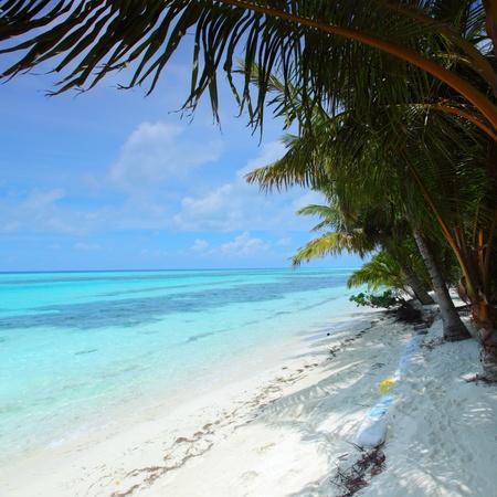 tropical island palm sea and sky Stock Photo - 11032549