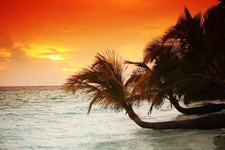sunset on the sea beach Stock Photo - 11032940