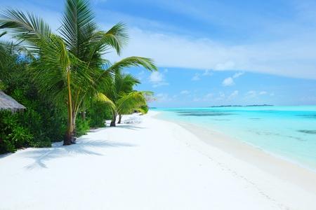 tropisch eiland palm zee en lucht Stockfoto