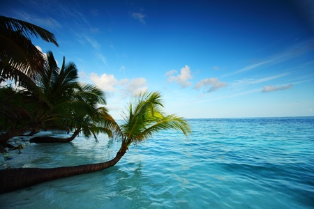 tropical island palm sea and sky photo