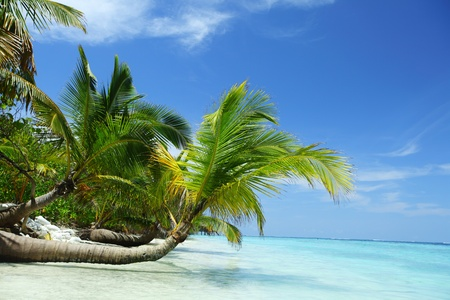 blue lagoon: isola tropicale palma mare e cielo Archivio Fotografico