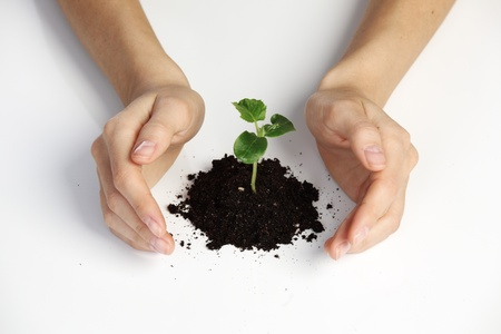 young plant cover their hands on a white background Stock Photo - 11372087