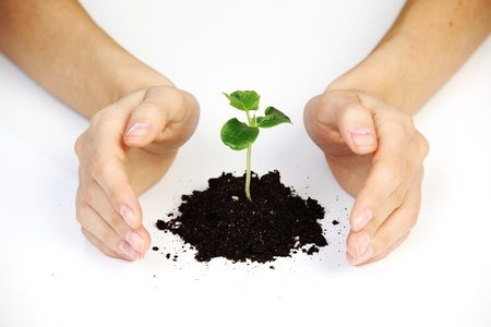 environmental protection: young plant cover their hands on a white background