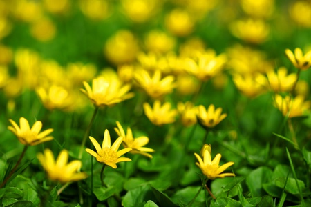 yellow spring flowers macro close up Stock Photo - 11949986
