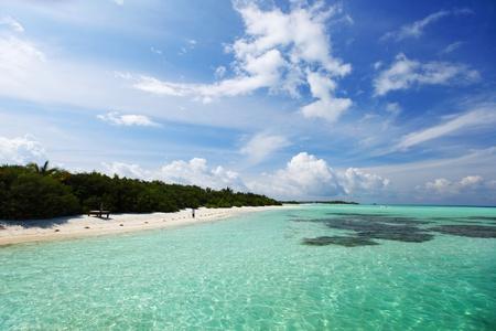 tropical island palm sea and sky photo