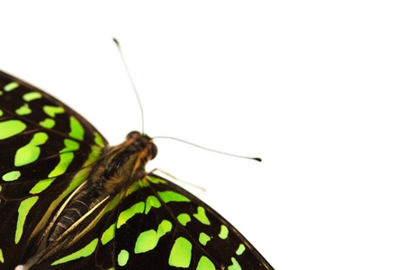 Graphium isolated on white background Stock Photo - 12040507