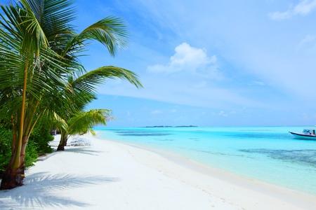 beach summer: tropical island palm sea and sky