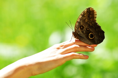 butterfly on a female hand close up photo