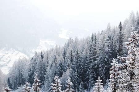 alpen: forest in snow on alpen top