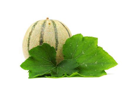 cantaloupe melone isolated on white Stock Photo - 12508420