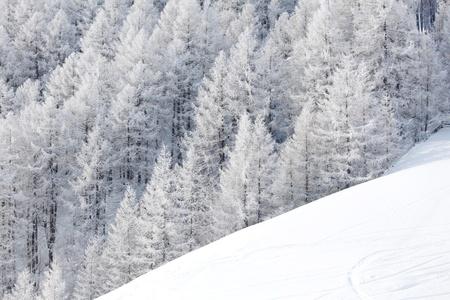 bos in de sneeuw op alpen boven