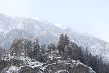 trees in snow on mountains Stock Photo - 12983992