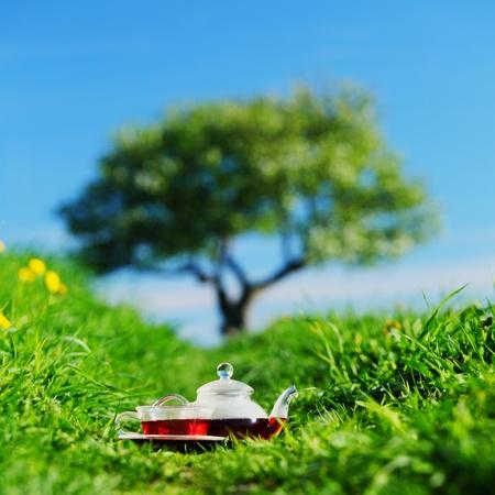 Natural tea on green grass Stock Photo - 13515120