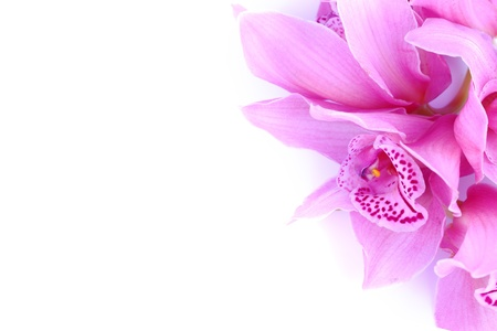 beautiful pink orchid against blue background photo