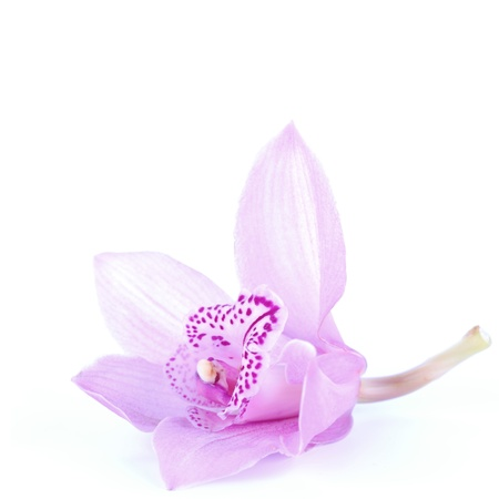 beautiful pink orchid against blue background Stock Photo - 14017662