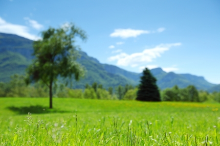a beautiful view of the alps tree on grass field Stock Photo - 14095822