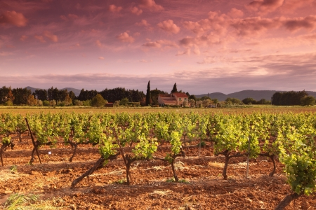 vine country: Amazing Vineyard Sunset in france Stock Photo