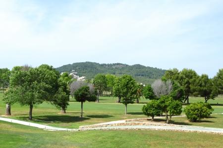 Green grass on a golf field photo