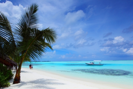 tropical island palm sea and sky Stock Photo - 14219413