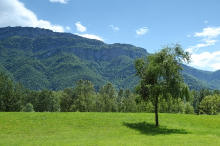 a beautiful view of the alps tree on grass field Stock Photo - 14560315