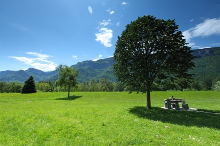 a beautiful view of the alps tree on grass field Stock Photo - 14685174