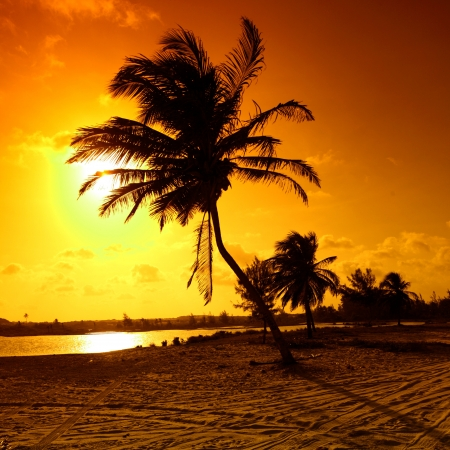 palm in yellow sunrise sky Stock Photo - 14799052